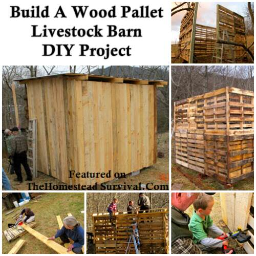barn 500x500 1 The Building of a Wood Pallet Goat Barn  DIY Project
