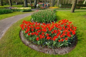 keukenhof flower garden 300x200 Flower Bulbs   Planting in Layers for a Continuous Blooming Flowers