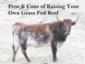 IMG 1626mmmmmmmm Pros & Cons of Raising Your Own Grass Fed Beef