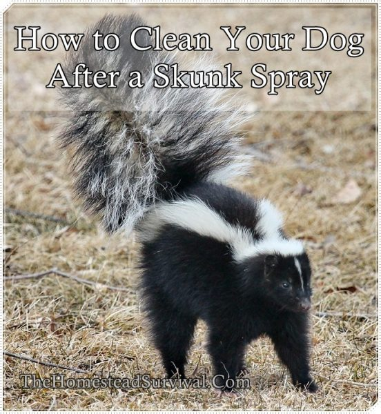 How to Clean Your Dog After a Skunk Spray