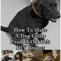 How To Make A Dog Collar From An Old Belt