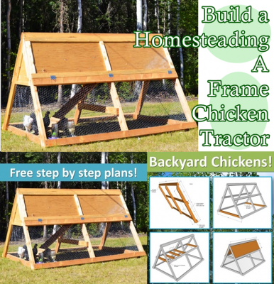 build a homesteading a frame chicken tractor