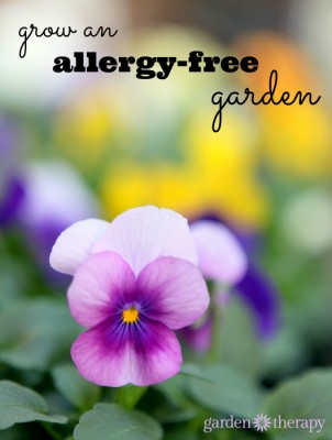 These Plants Will Help Remove Allergy Causing Pollen From Your Yard And Garden