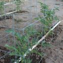 Water Veggies Not Weeds With PVC Drip Irrigation