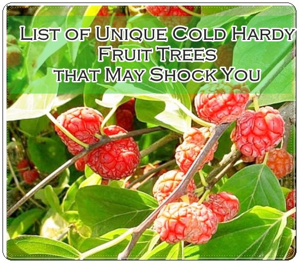 This List Of Unique Cold Hardy Fruit Trees That May Shock You And Change Your Mind About Which To Add Homestead