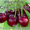 Prepare Cherry Pits for Planting and Germination