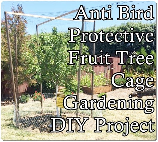 Anti Bird Protective Fruit Tree Cage Gardening DIY Project