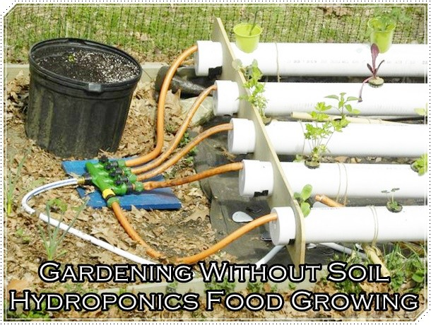 Gardening Without Soil Hydroponics Food Growing - Gardening - Homesteading