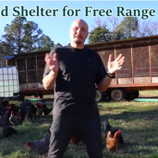 Water and Shelter for Free Range Chickens